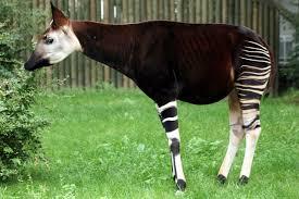 Exportation des espèces animales de la RDC: le démenti peu crédible du ministre de l'environnement ?